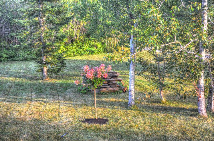 2014-08-arbre charles-antoine - 01